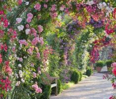 Blossom Hydel Park, Munnar